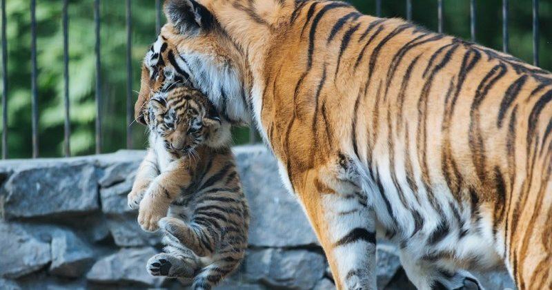сколько будет стоить реконструкция харьковского зоопарка?