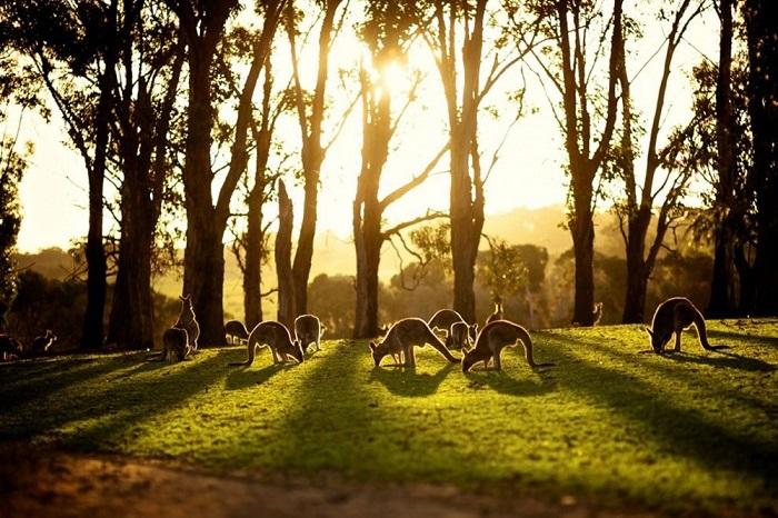 путешестви Австралия