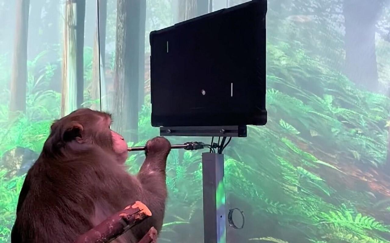 мавпа грає в відеогру «силою думки»