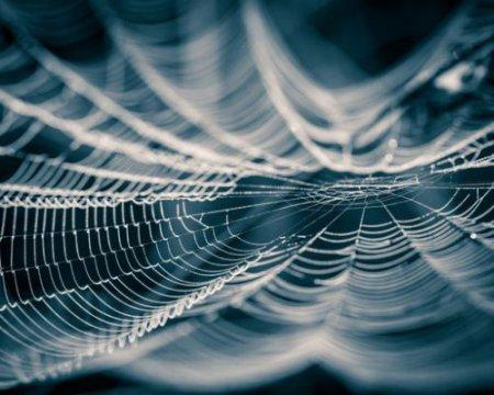 перетворення павутини в музику